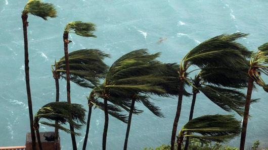 uragano_palme