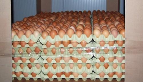 Uova contaminate distribuite anche a Siena: ordinato il ritiro
