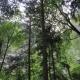 Psr, prorogati i termini per i contributi sugli ecosistemi forestali