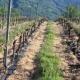 Agricoltura, assessore Viérin: pronto ddl per risarcimento danni