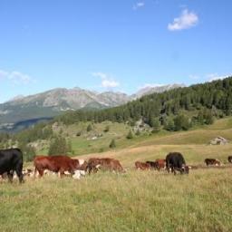 Nuova tranche di pagamenti dei contributi alle aziende agricole della Valle d'Aosta